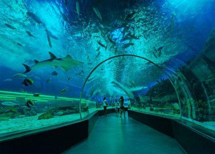 underwater acrylic tunnel Manila Ocean Park Philippines