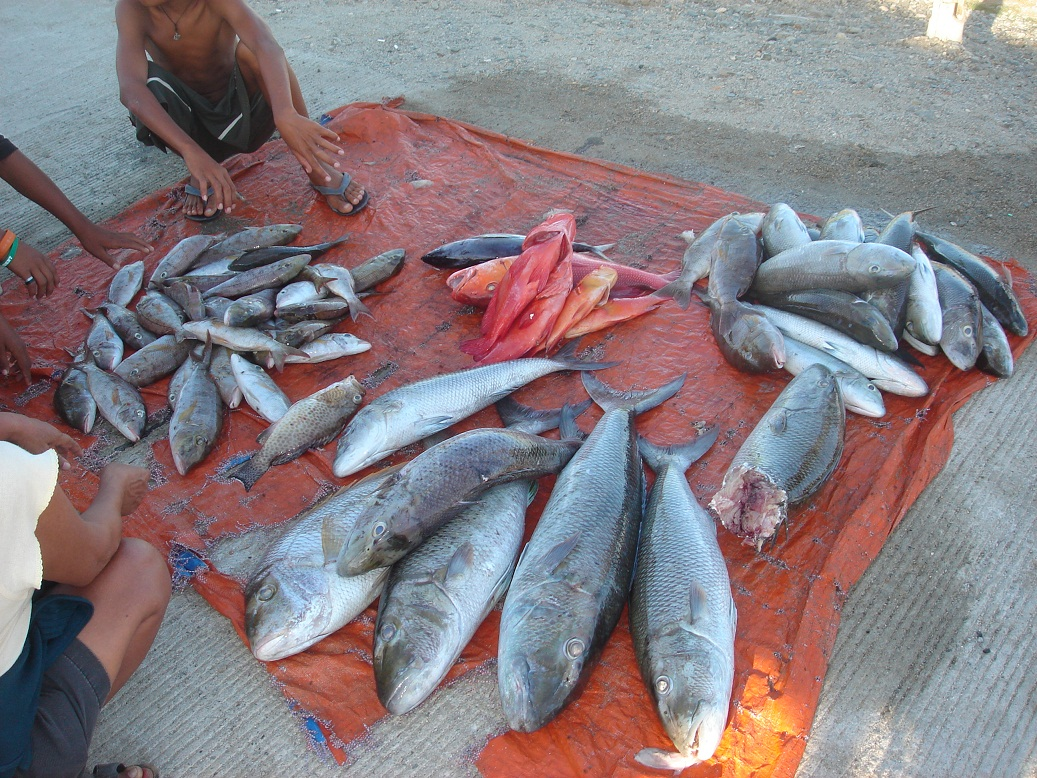 Fishing at Poblacion Beach Sipalay