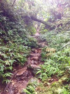mt makiling hike adventure
