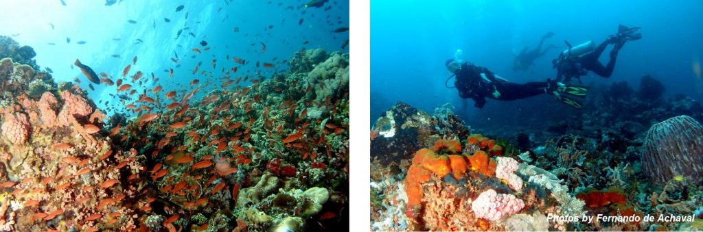Philippines best country in Asia for diving