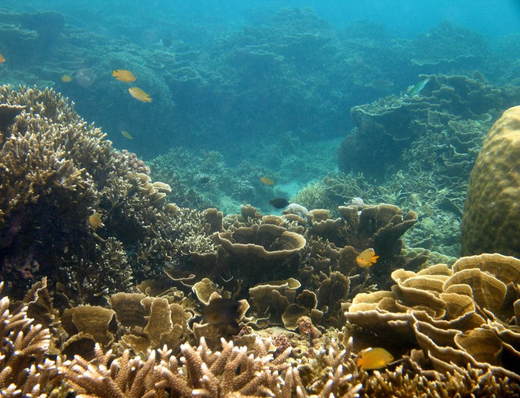 Anilao in Southern Luzon is rich with marine life and coral