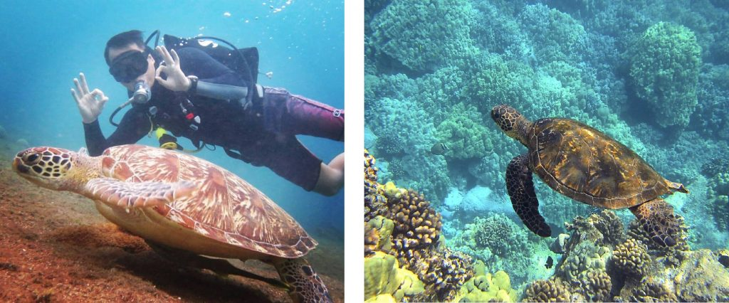 Philippines best country in Asia for sea turtles