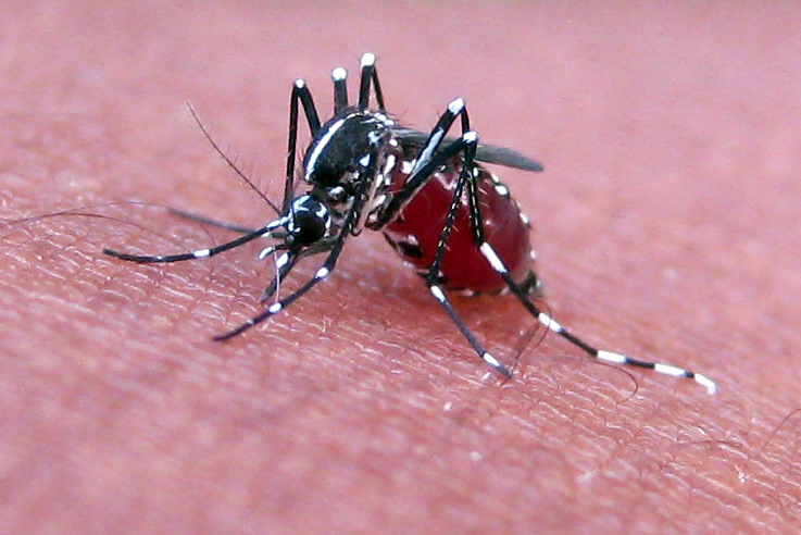 Healthcare in the Philippines with dengue fever