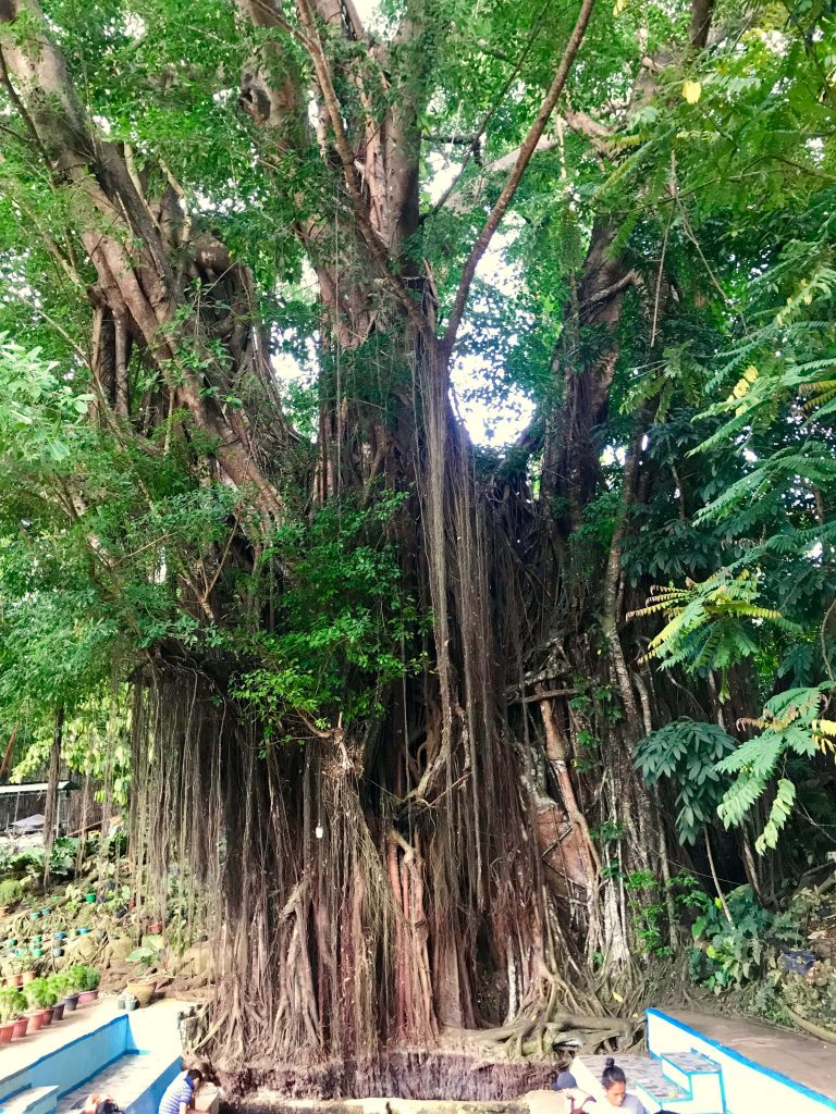 siquijor tourist spots balete tree