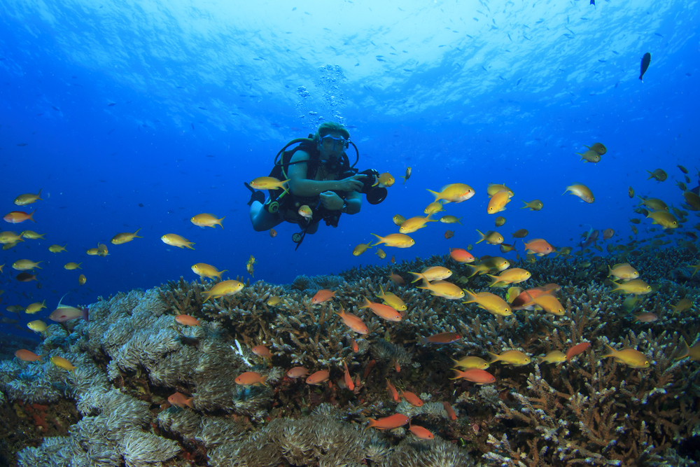Best Scuba Diving Places In Subic Bay